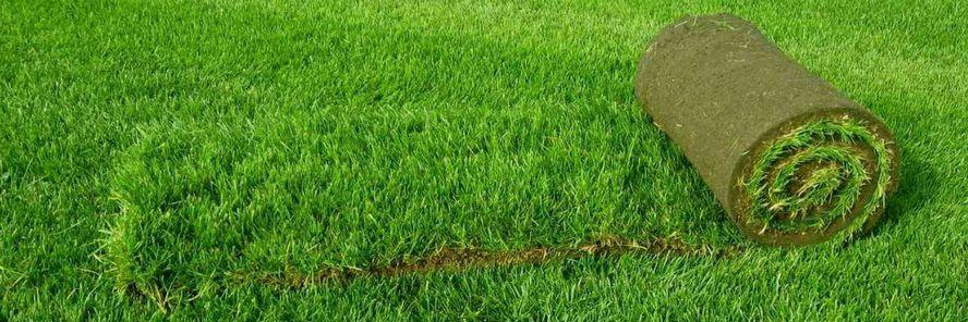 рулонный газон цена за м2